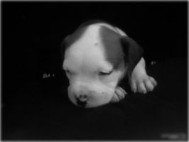 my baby pit by duskwlofowens