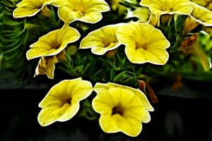 Yellow Toots by digitalpix4all