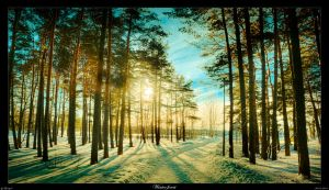 Winter forest by Th3Un1qu3