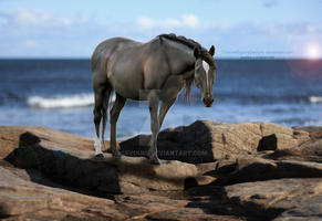 Wonderer by CoutureEquineDesigns