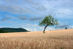 my special tree on the hill by ddaga
