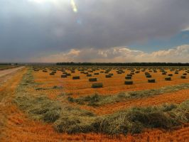 Gathering the Hay by SharPhotography