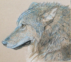 Blue wolf by TiffMootrey