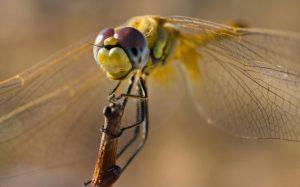 another dragonfly by scott-leeson