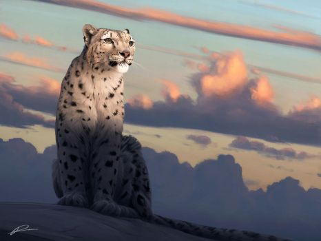 The Snow Leopard by normanrawnart