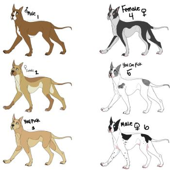 Great Dane Adoptables 2 by PrincessFrankie