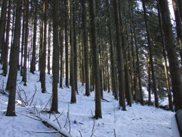 Snowy Forest Winter Backround Stock by AngelSTOCK22