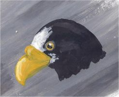 Stellers sea eagle headshot by Painted-Shadow