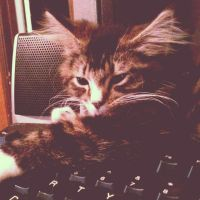 Chillin' on the Keyboard by DarlingChristie