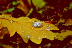 macro in autumn by rockmylife