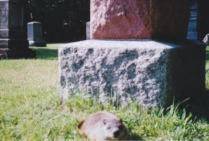 Grave Rodent by thePARANOIDghost