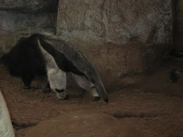 Giant Anteater02 by Fireborn46