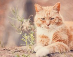 Sunny Cat by MathildeHPhotography