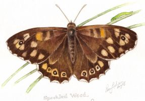 Speckled Wood Butterfly by Mad-Margaret