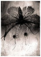 moth. by PanZerkorps