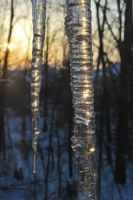 Icicles 01 by calger459