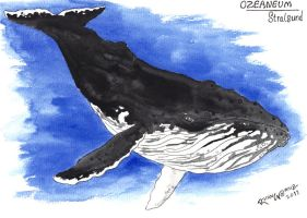 whale watercolor sketch by Solanum80