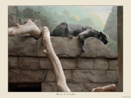 Life in Zoo VII by firework