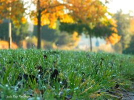 Dew drop grass.. by ClaudiaPPhotography