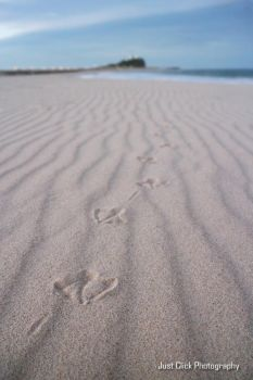Footprints by The-name1ess