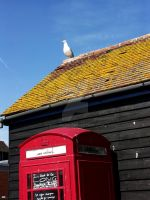 The Seagull and the Phone by MSchneWe