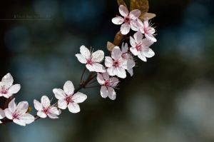 Spring flowers III by Mad-Popietro