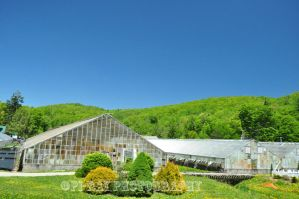 Aged Greenhouses by Pi-ray