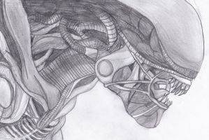 Alien from the film Alien Drawing Tidier by addajocl15