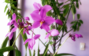 Glowing Purple Orchid by THE-LEMON-WATCH