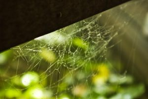 Wet Web by Vagrant123