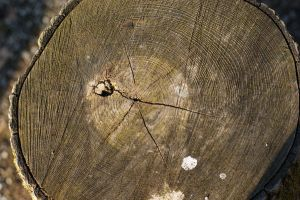 Wood 1 by Stichflamme-Stock