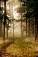 Fog in forest by Tuneri