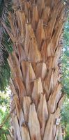 Bark palm 2 by jaqx-textures