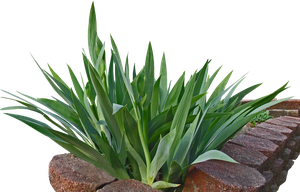Green Leaves Png Stock by WDWParksGal-Stock