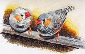 Yum Yum Zebrafinch by mirrorplex