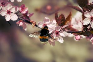 Busy Bumblebee by shortass205
