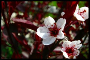 Blossom by Danette
