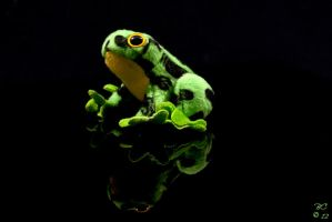 Froggy Friend by horai