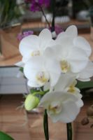 nice white orchids 4 by ingeline-art