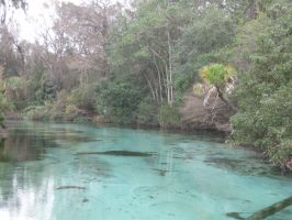 060 Weeki Wachee Springs by crazygardener