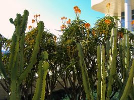 Cactus Garden by Humble-Novice