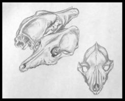 Skulls by Duckweed