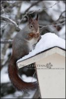 Mealtime disturbed by yenna-photo