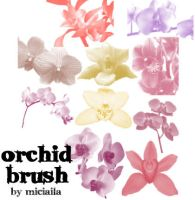 Orchid Brushes by Miciaila