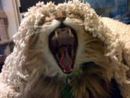 This is my Rawr Face by turnerstokens