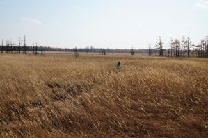 Autumn journey Artem Lost in the grass by SERGEY-05