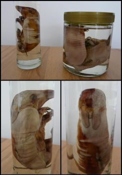 Armadillo Fetuses by CabinetCuriosities