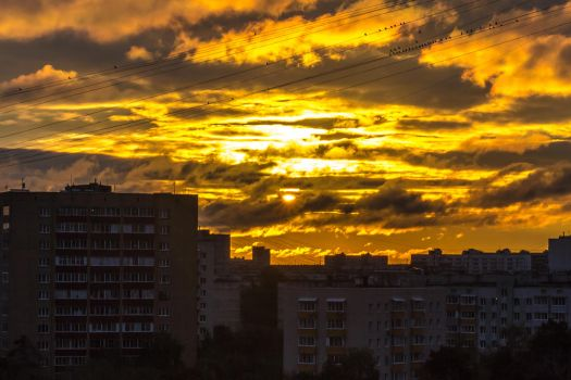 Rise up in the city by coLdik