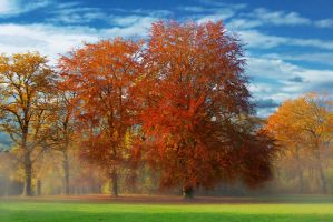 Park in autumn by Kunstlab