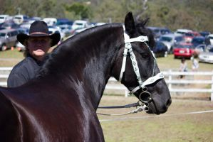 STOCK - Canungra Show 2012 163 by fillyrox